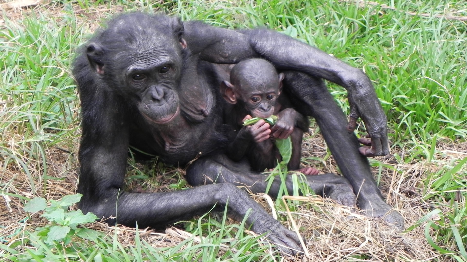 Bonobo Wildlife Refuge